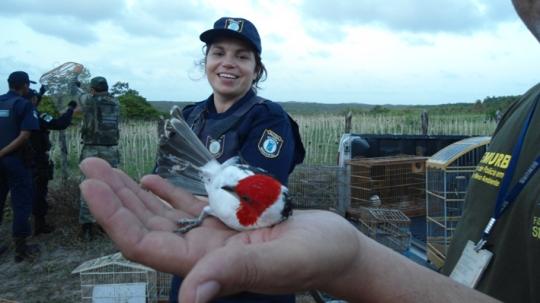 Fiscais e Guardas Ambientais de Natal/RN libertam pássaros após descobrir cativeiro
