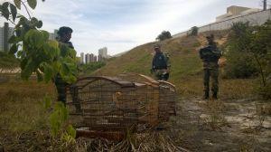 Fiscais e Guardas Ambientais devolvem animais à natureza