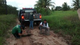 Fiscal Ambiental 02