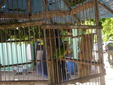 Fiscalização Ambiental Integrada - SEMURB - IBAMA - DEPREMA - 09