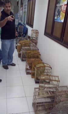 Recebimento dos animais resgatados pela Deprema