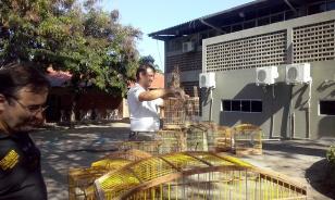 Avaliação dos animais