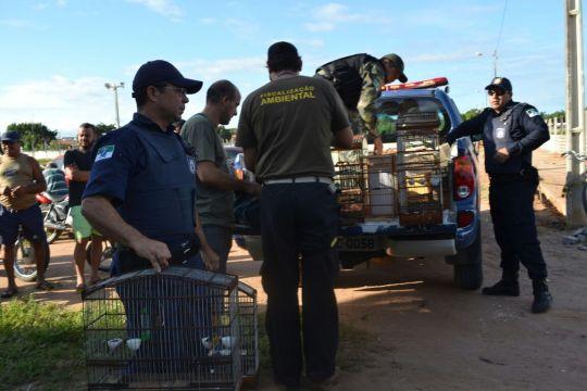 Fiscal Ambiental do Natal - GAAM - DEPREMA - Resgate de pássaros - (166)